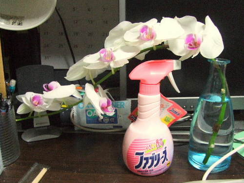 Phalaenopsis and Febreze.